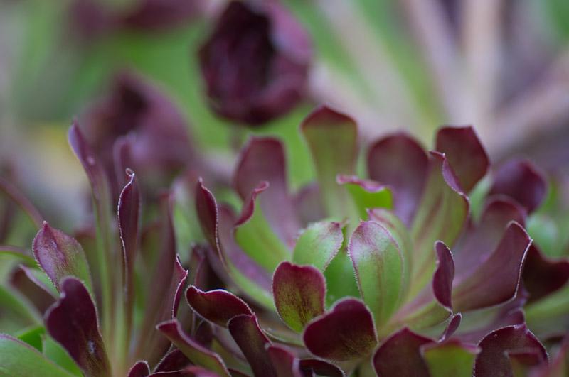 Manilva Berits blommor