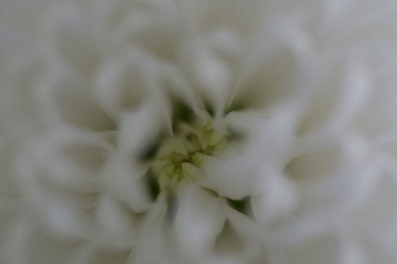 Manilva blomvas