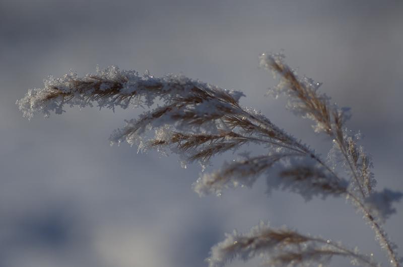 Vinterstrå