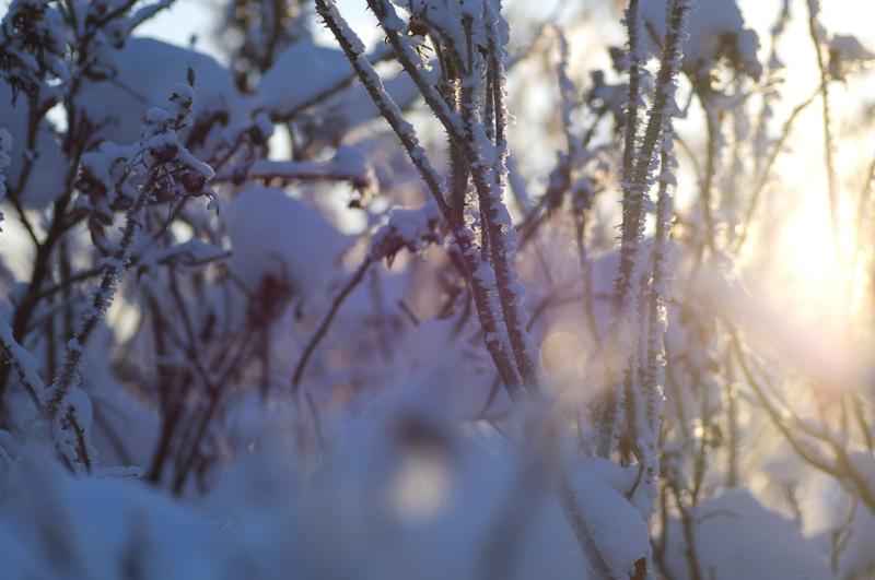 Vinterdis